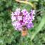 Beeprofilepic