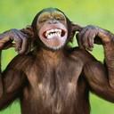 Funny monkey 1