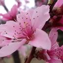 PinkPandaz