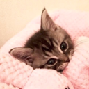 Pinkygirlmeow2