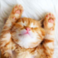 Kitten105
