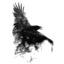 The Black Stone Raven