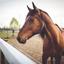 Rs pnz horse regs pexels