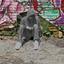 Ig grafitti v1