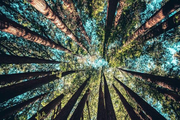 Trillion trees prompt